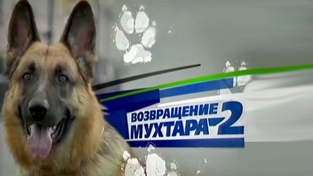 """Телесериал """"Возвращение Мухтара"""" (16+)."""